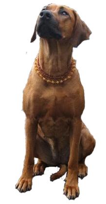 pets_dog2